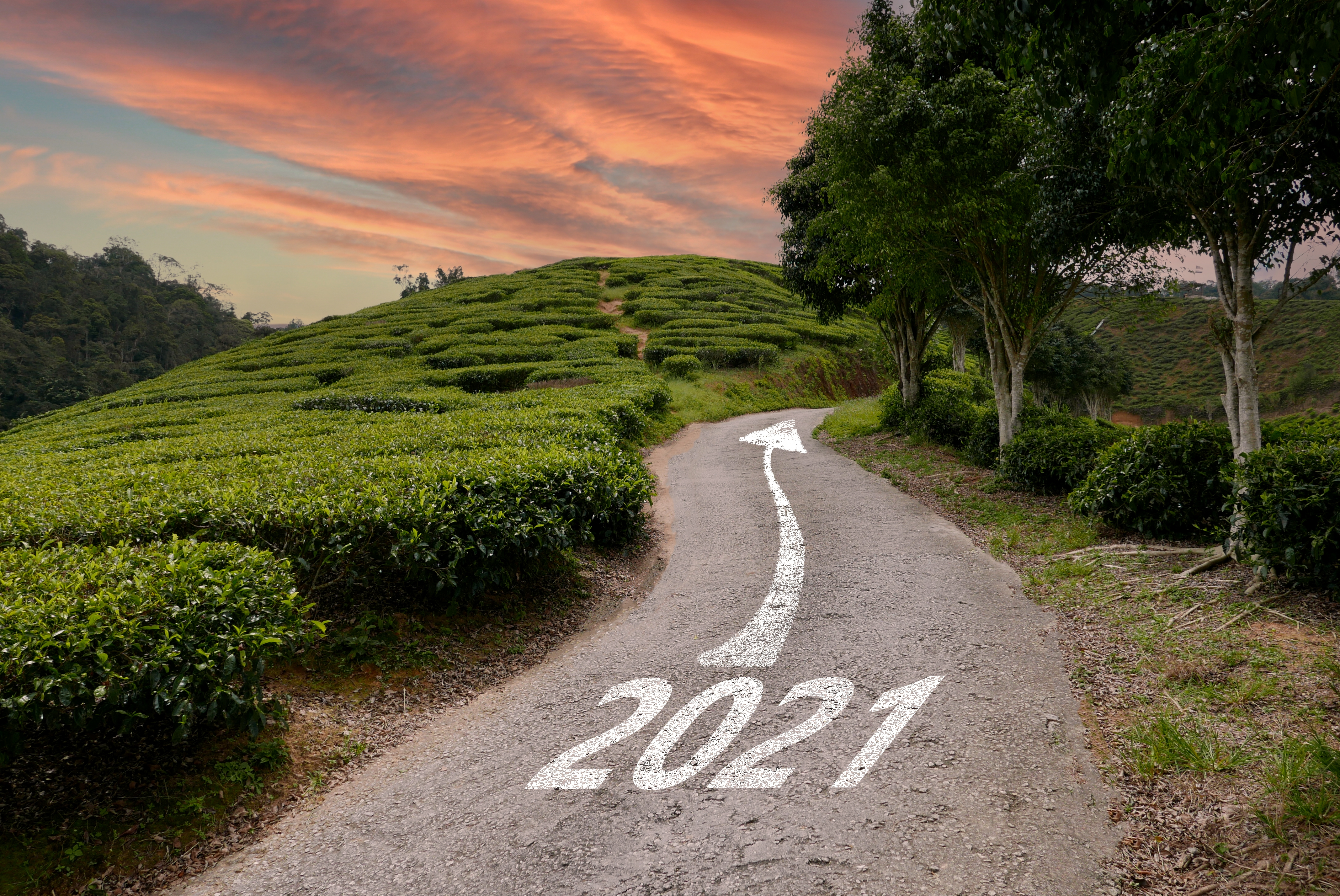 a-road-or-path-way-to-the-new-year-2021-surrounding-by-landscape-of-tea-plantation-during_t20_0XJgye
